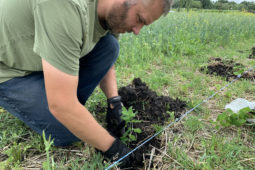 Planting More Fruit in the Orchard – Haskap!